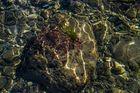 Glasklare Ostsee