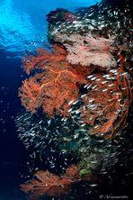 glass fish vortex