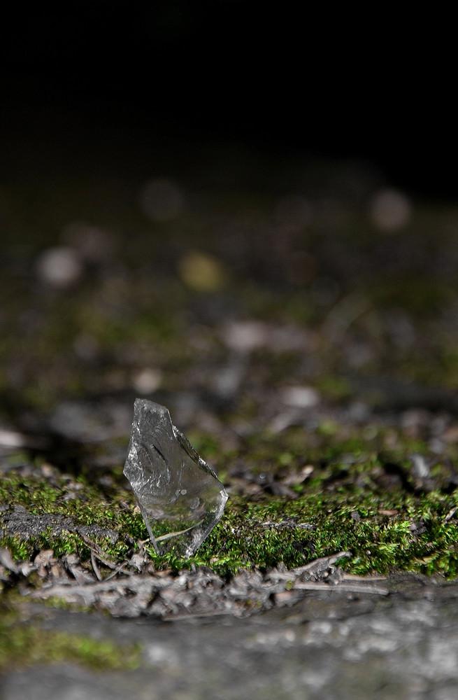 Glasscherbe im Moos