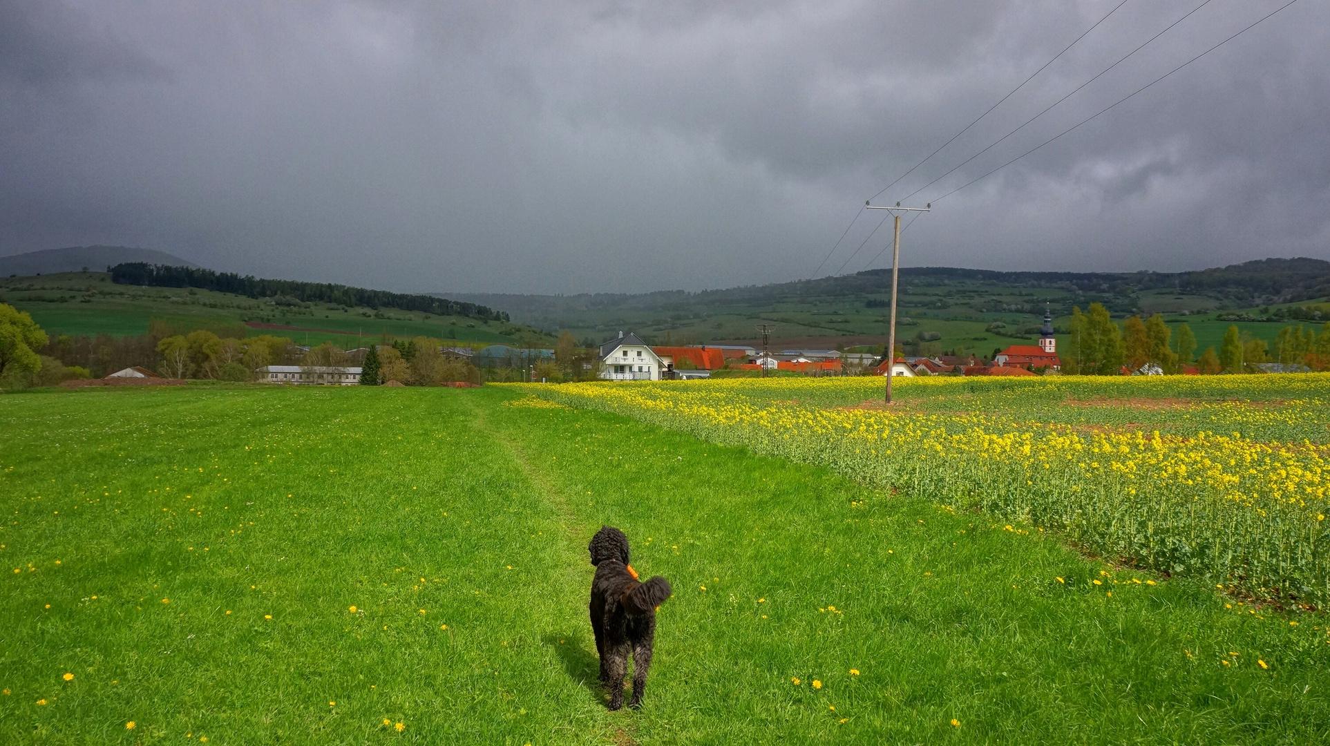 gleich wird es regnen (pronto va a llover)
