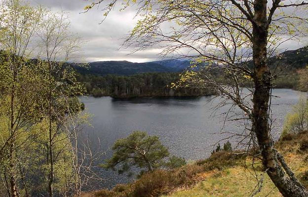 Glen Affric in the West Highlands of Scotland