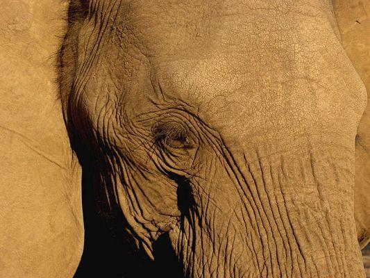 glen der elefant