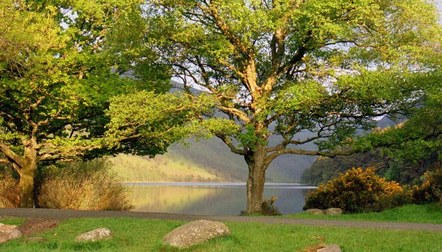 Glendalough - Morgenlicht