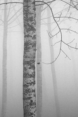 Gli alberi di John Berger - 1