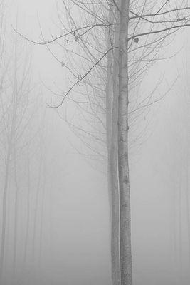 Gli alberi di John Berger -10