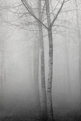 Gli alberi di John Berger -11