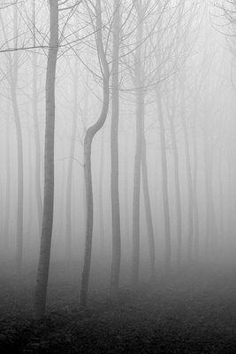 Gli alberi di John Berger -12