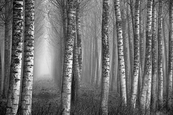 Gli alberi di John Berger -13