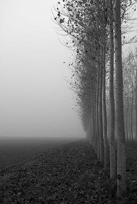 Gli alberi di John Berger -16