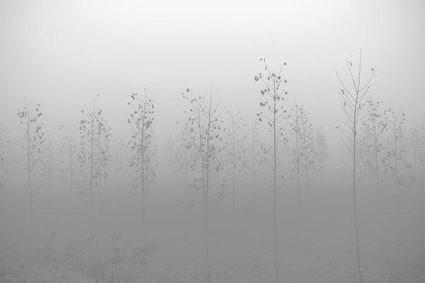 Gli alberi di John Berger - 2