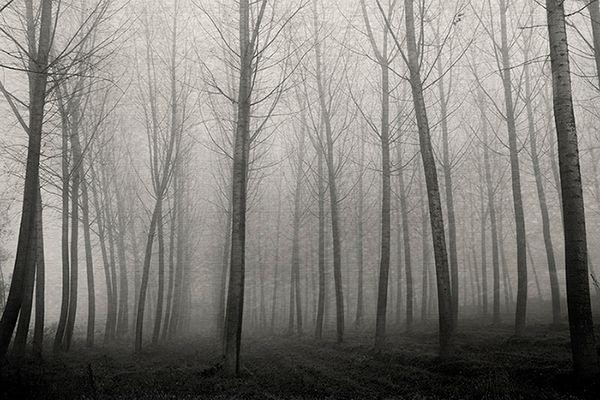 Gli alberi di John Berger - 20