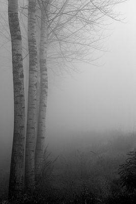 Gli alberi di John Berger - 3