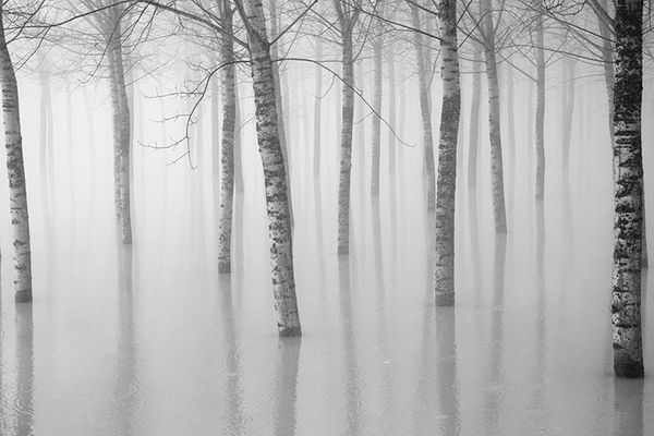 Gli alberi di John Berger - 4