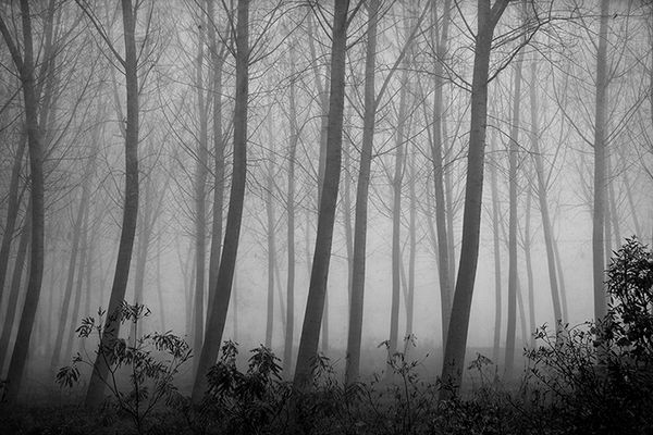 Gli alberi di John Berger - 5