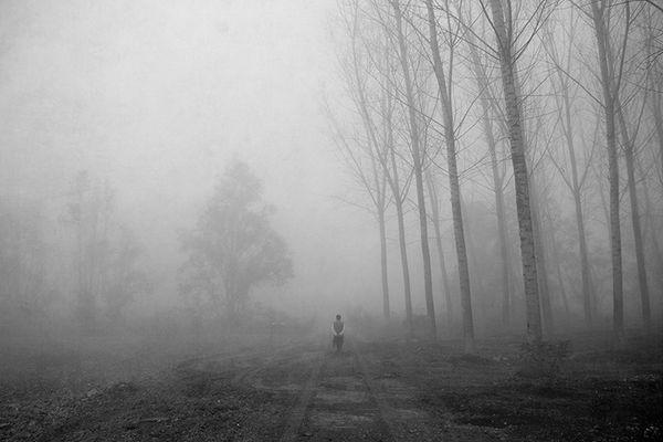 Gli alberi di John Berger - 6