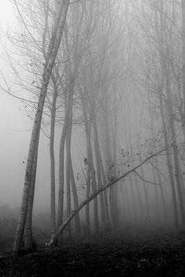 Gli alberi di John Berger - 7