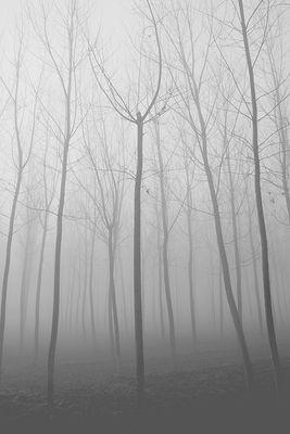 Gli alberi di John Berger - 8
