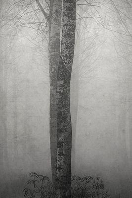 Gli alberi di John Berger -9