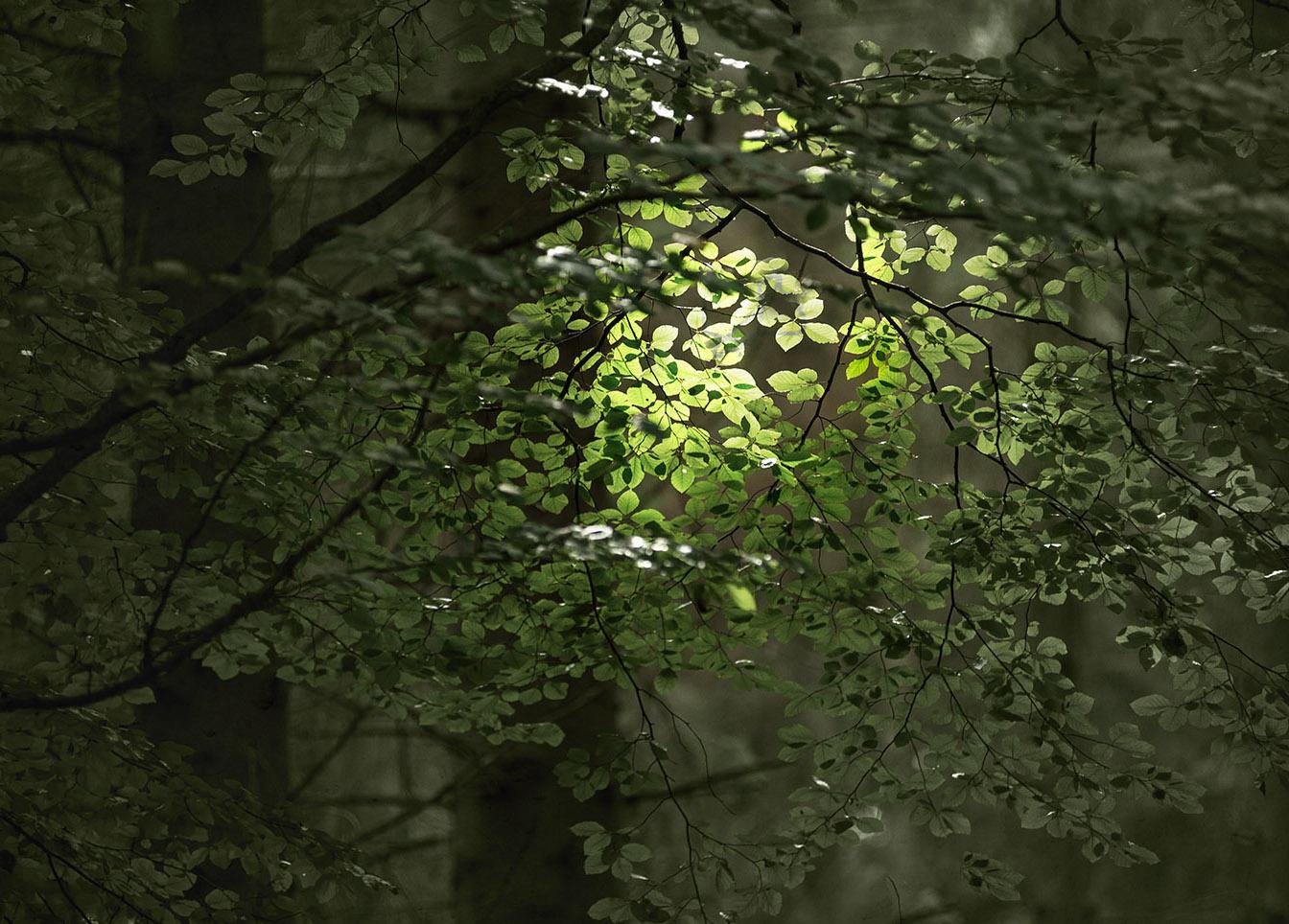 Glimmmer of light