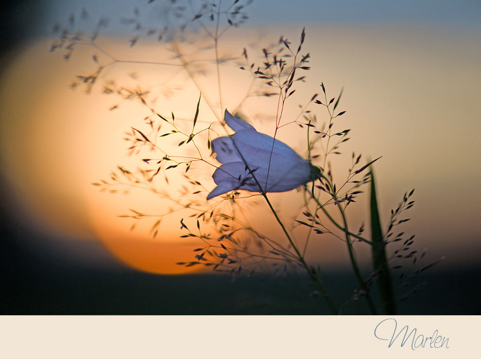 Glockenblumenblau