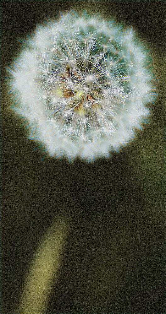 Glowing Dandelion