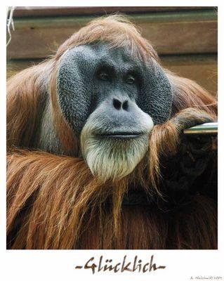 Glücklich, Gefangenschaft, Frankfurter Zoo