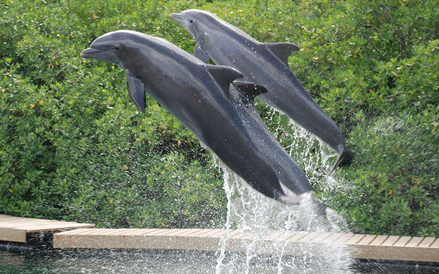 Glückliche Delphine in Mexiko