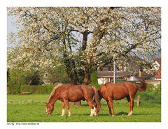 Glückliche Pferde....