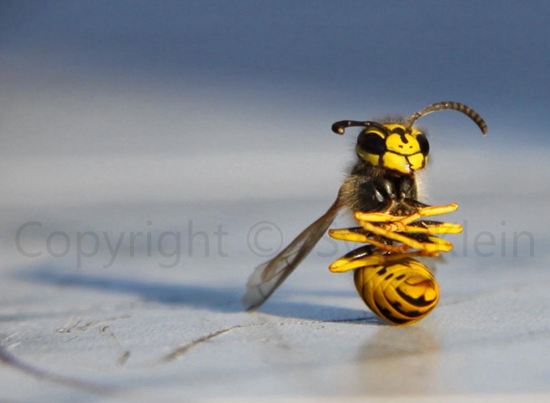 Glückliche Wespe nach Ihrem Tod