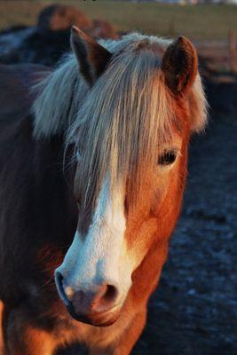 glückliches Pferd
