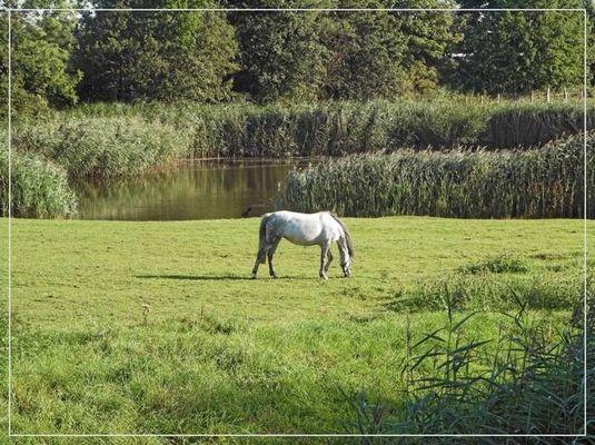 Glückliches Pferdeleben