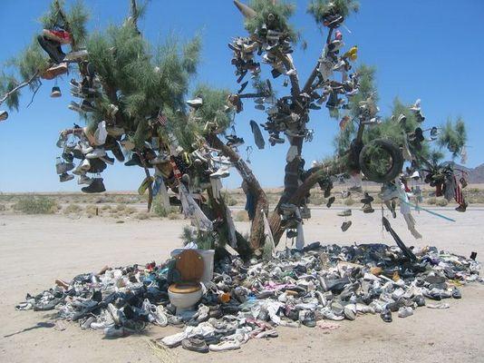 Glücksbaum der Indianer 2 Nevada