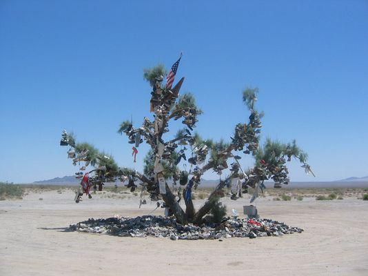 Glücksbaum der Indianer Nevada