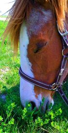 Glücksgefühl der Pferde