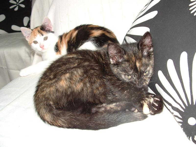 glückskatzen tamy und mogli