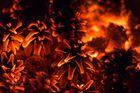 Glühende Kiefernzapfen im Osterfeuer
