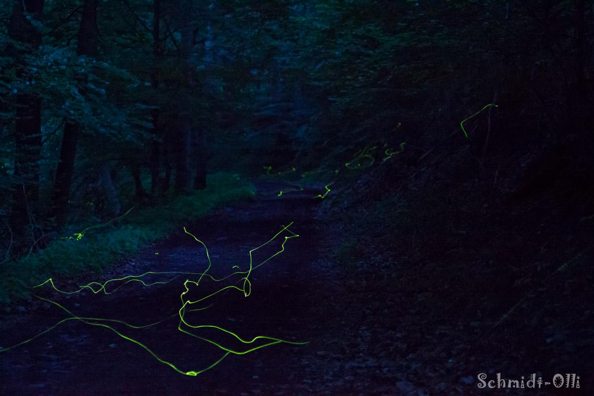 Glühwürmchen 1