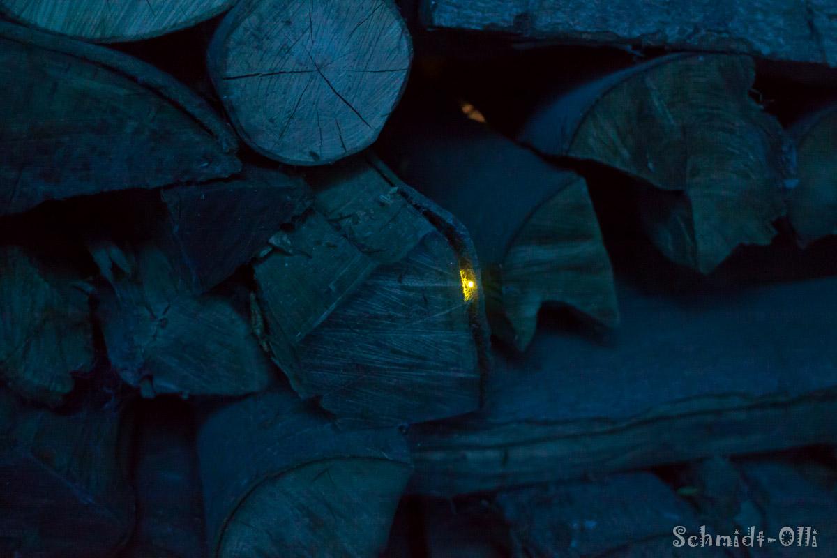 Glühwürmchen 4