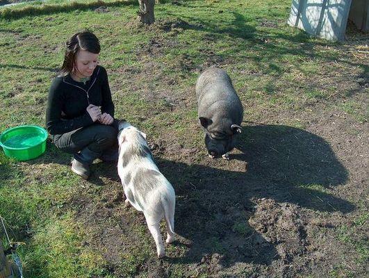 """Gnadenhof """"Schweineparadies"""" I"""