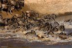 Gnu-Crossing am Mara River (3)
