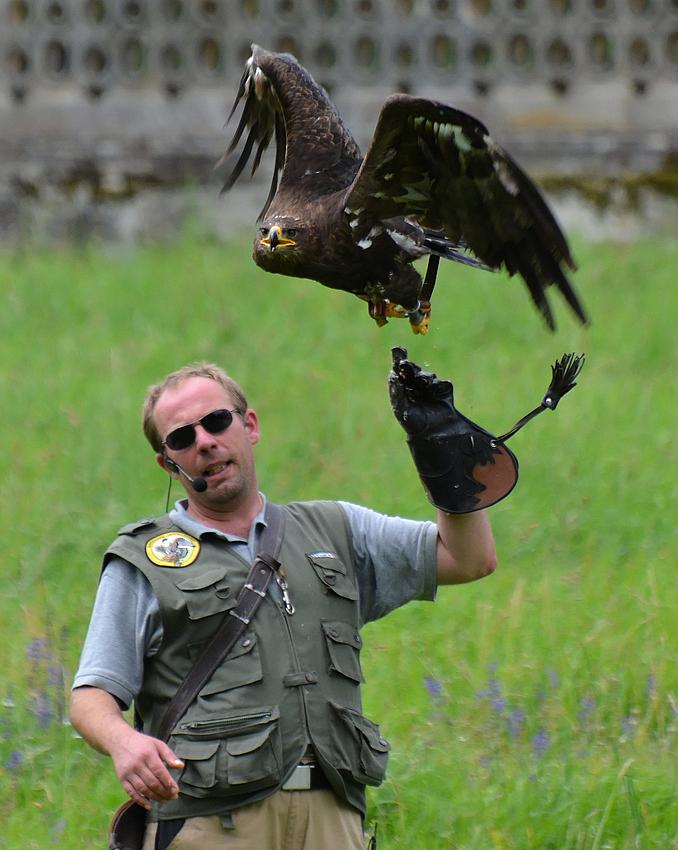 Go, eagle, go!