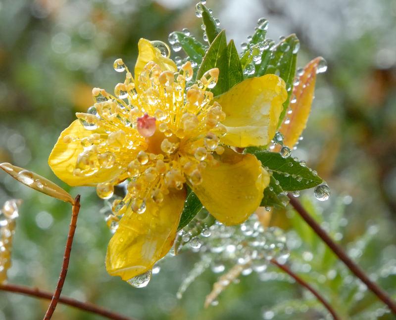 Gocce di rugiada foto immagini piante fiori e funghi for Piani di progettazione domestica con foto
