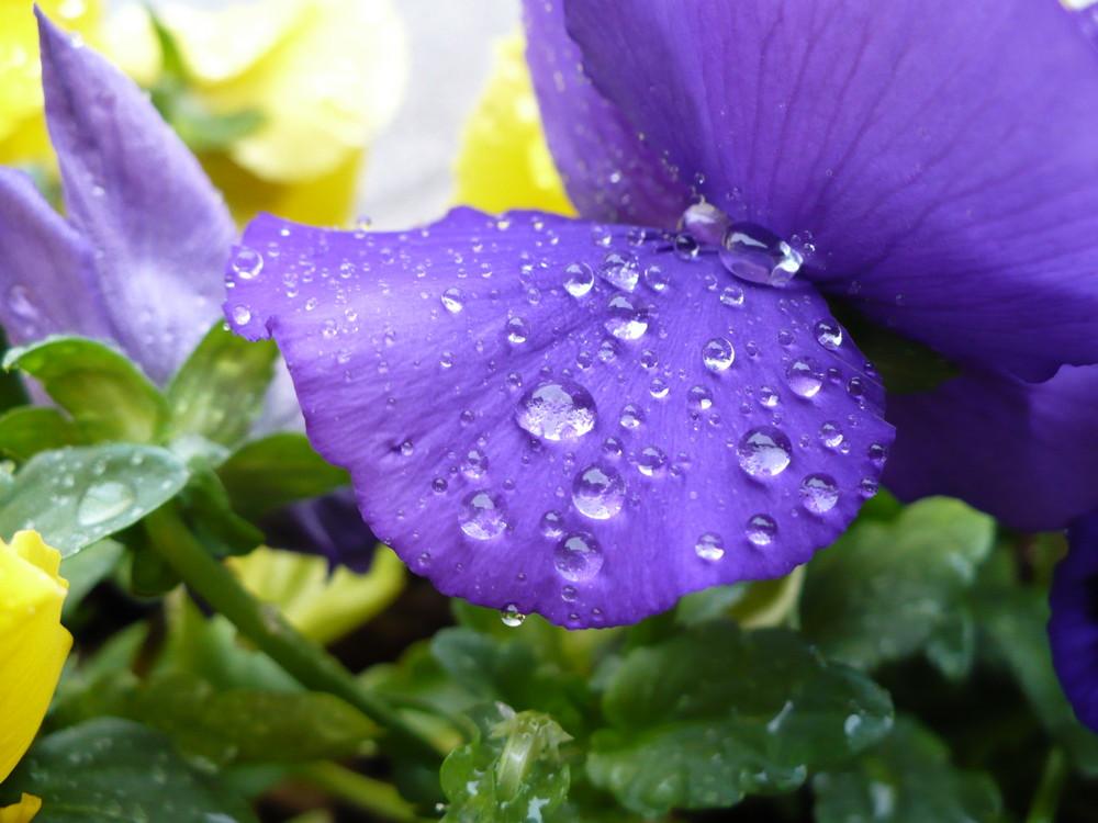 goccie di pioggia