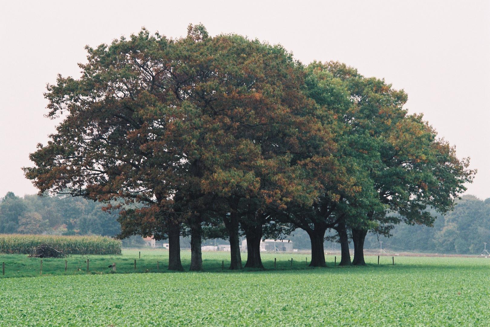 Goch, Herbst