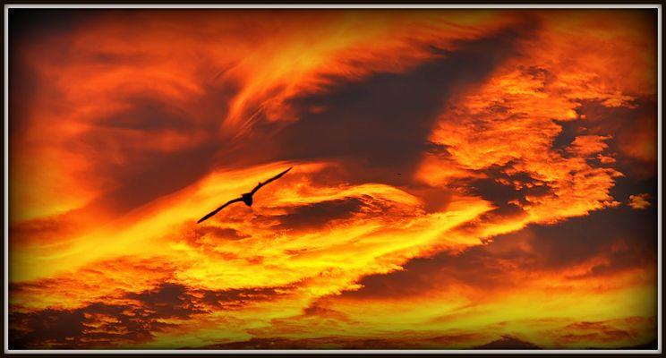 Goéland au coucher du soleil !