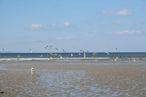 Goélands et lévrier jouent sur fond d'océan.