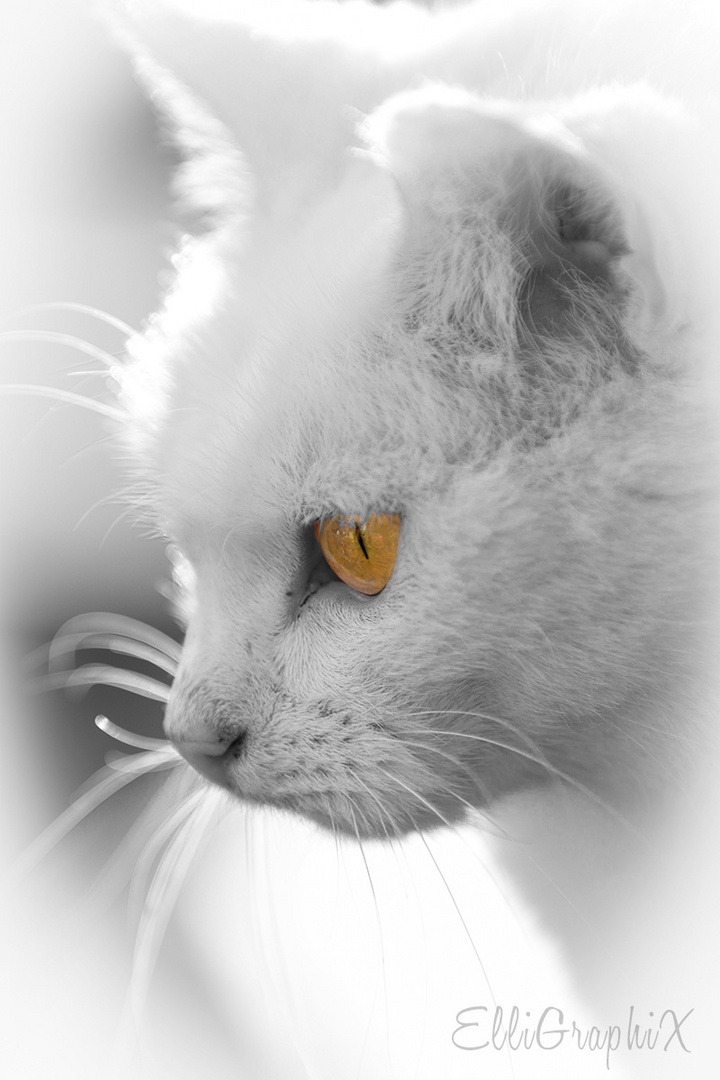 Gold-Auge