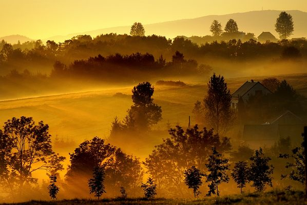 gold autumn morning