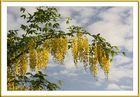 Gold-Regen
