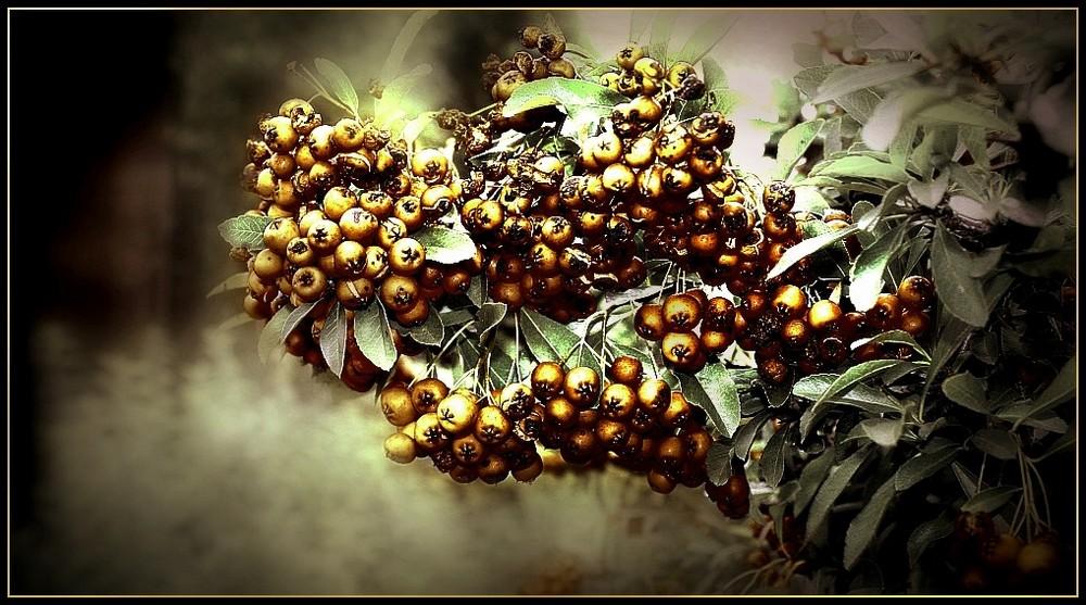 Goldbeeren